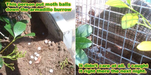 Moth balls repel snakes