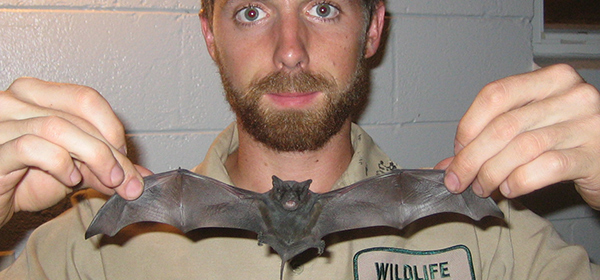 How To Kill Bats In Your Attic With Poison Or Fumigants
