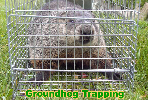 How to Keep Groundhogs Away from Your Yard Garden Shed
