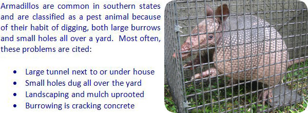 How To Get Rid Of Armadillos in the Yard, Lawn, or Garden ...