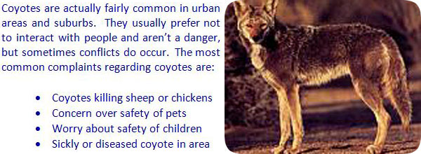 How To Get Rid Of Stray Cats In Your Backyard how to get rid of coyotes in your yard