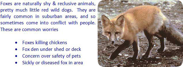 How To Keep Foxes Away From Your House Yard Garbage Shed
