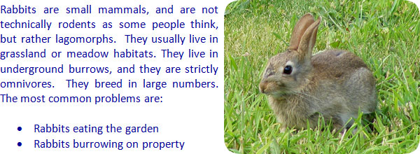 how to keep rabbits away - How To Keep Rabbits Out Of Garden