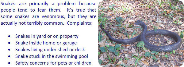 Snake Trapping Methods And Tips