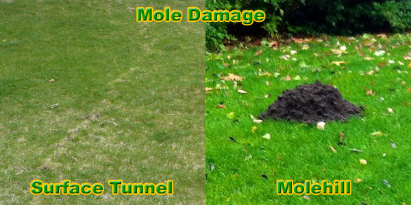 How To Get Rid Of Moles Naturally Fast