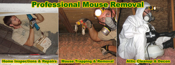 House Mouse Trap House Mouse Information Amp