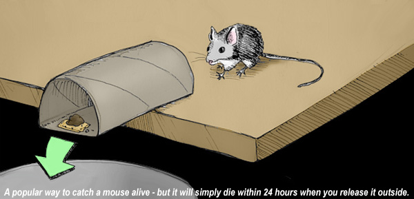 How To Catch A Mouse Alive Without Killing It In The House