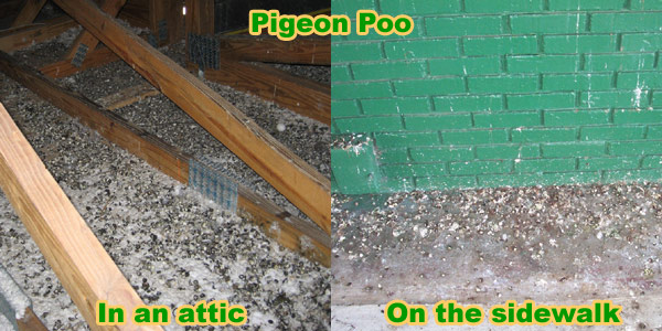 How To Keep Pigeons Away From Your House Patio Balcony