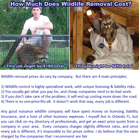 wildlife removal armadillo