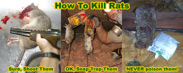 How To Kill Rats Without Poison
