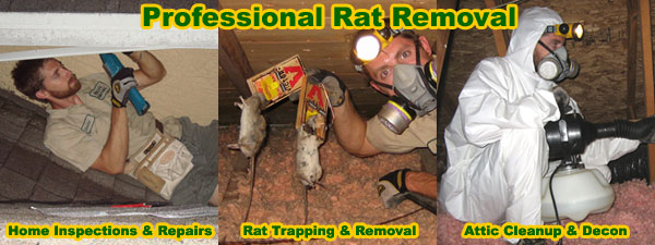 How To Get Rid Of Rats In The Attic House Walls