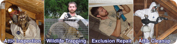 Northeast Ohio Wildlife Animal Control - Critter Removal and