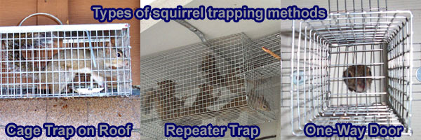 michigan bat wpid doors image way squirrel everytime hole control repaired door one works
